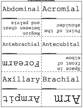 Anatomical Terms template