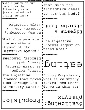 Digestive System Flash Cards