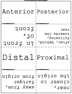 Directional Terminology template