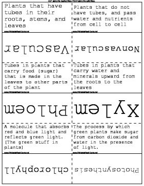 Plant Vocabulary template
